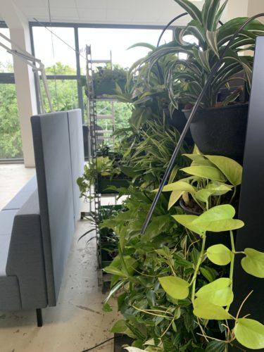 gruene-waende